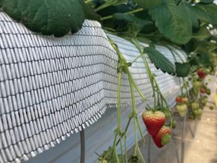 <p>イチゴ以外にも果樹・花卉栽培といった施設園芸全般に使用できます。</p>
